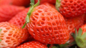 """イチゴは""""野菜""""です。【鈴木杏樹のいってらっしゃい】"""