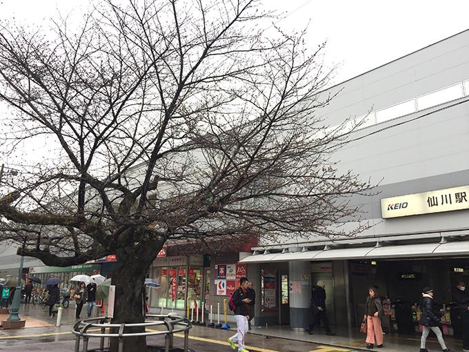 仙川駅前IMG_5351(w680)