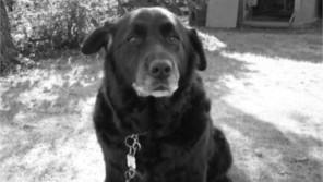 愛犬の死、受け入れられますか? ドルチェがくれた「3年間の猶予期間」【わん!ダフルストーリー】