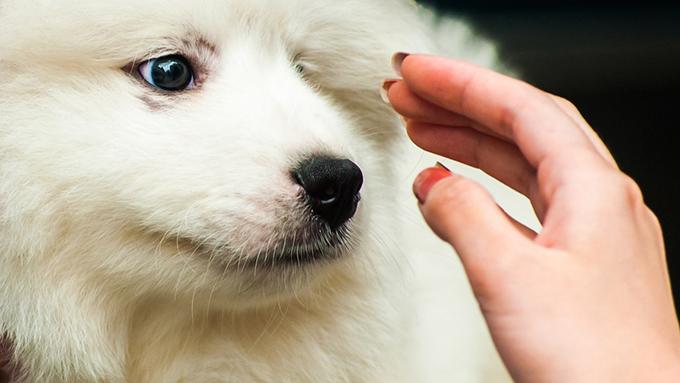 愛犬をほめることは撫でることではありません!【ペットと一緒に vol.35】