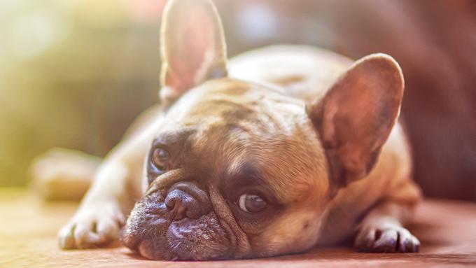 エアコンをつけての留守番でも愛犬や愛猫が熱中症に!注意点と予防策【ペットと一緒に vol.36】