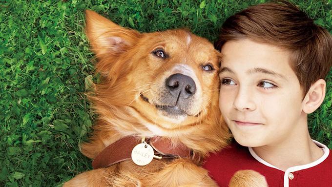 もしもかつての愛犬が生まれ変わって会いに来てくれたら…『僕のワンダフル・ライフ』
