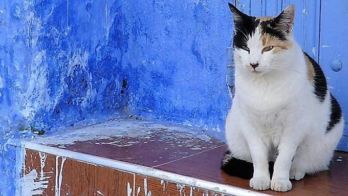 モロッコは猫の楽園!フォトジェニックな猫たちとの出会いにワクワク