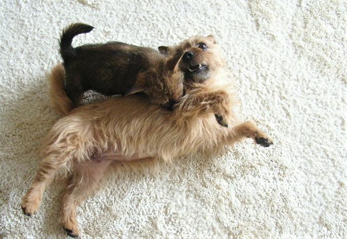 母犬 子犬