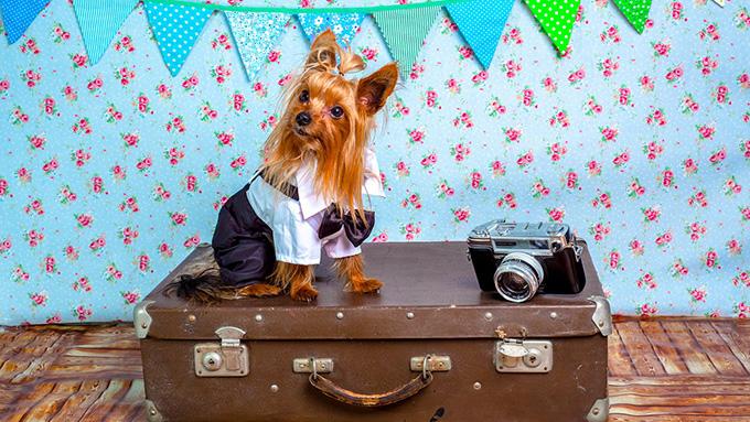 犬と一緒に旅行に出掛けよう!ペットは旅行業界の新・お得意様!