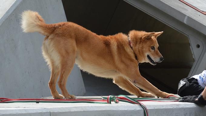 保健所から救われて災害救助犬となり大活躍する犬・夢之丞のストーリー