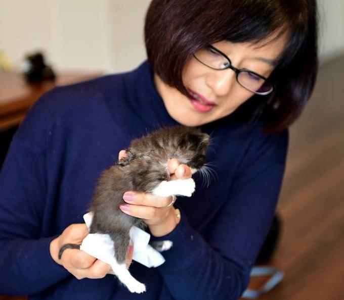 子猫 世話 ボランティア