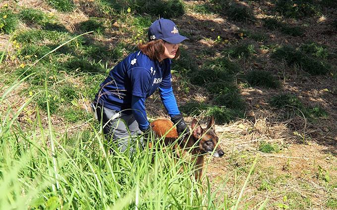 災害救助訓練 災害救助犬 いぬ 犬