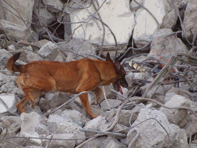 災害現場 災害救助犬 いぬ 犬