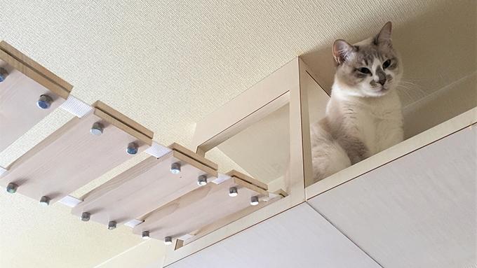 猫専門の建築士としての道に導いた、野良猫との2度の出会い