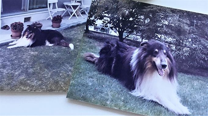 ペットロス カウンセリング 愛犬 写真