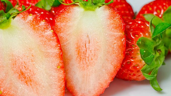 イチゴにとって大切な相棒 ミツバチとの甘い関係