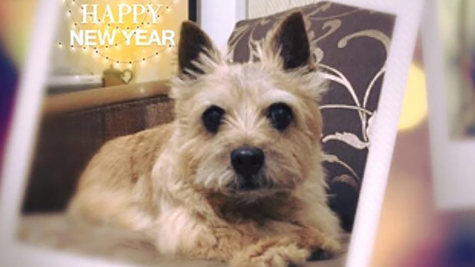 誤飲で12歳の愛犬が正月に緊急入院!  手術ハイリスクの老犬の運命は!?