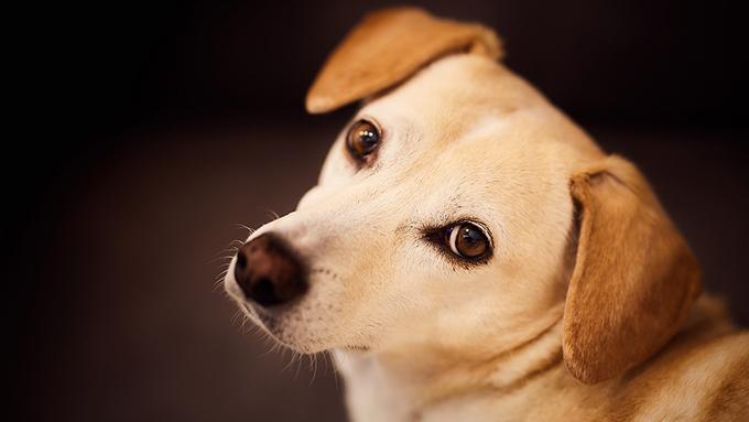 イヌにまつわる涙を誘うイヌのことわざ