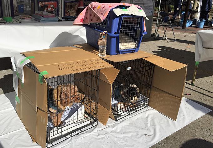 ペット 同行 避難 訓練 愛犬 犬 イヌ いぬ トイプードル チワワ