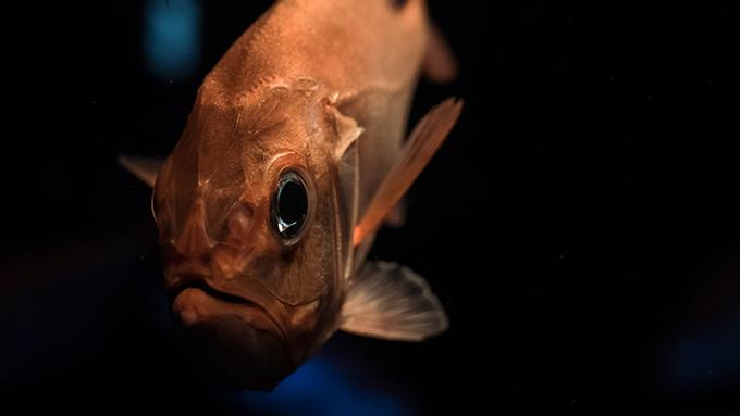 人間に見えないものも見えている? 意外とすごい魚の眼
