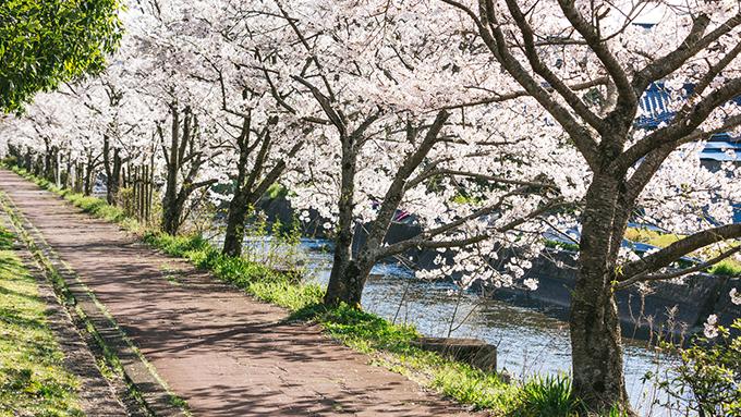 奈良時代にお花見といえば桜ではなく別の花だった!