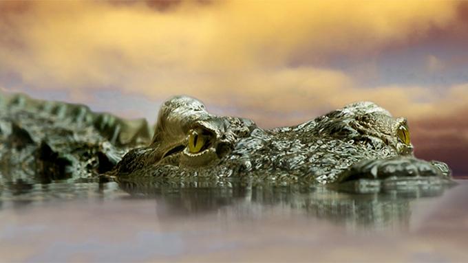 不思議なワニの習性 石を食べる『胃石』の驚きの理由