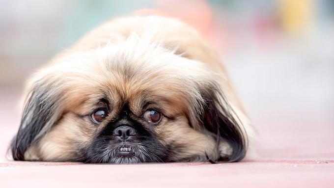 東日本大震災から7年 ペットの防災はどうなっている⁉