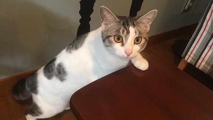 """殺処分寸前の半身麻痺の子猫が、保護猫カフェの看板""""美猫""""に!"""