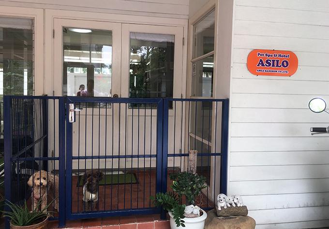 ASILO Pet Spa and Hotel 愛犬 イヌ 犬 いぬ ワンちゃん わんちゃん ペットホテル タイ 一軒家