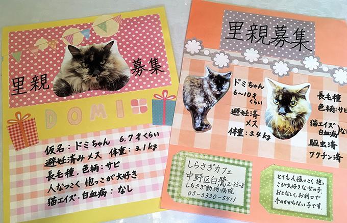 里親 募集中 保護猫 猫カフェ ねこ ネコ 猫 しらさぎカフェ