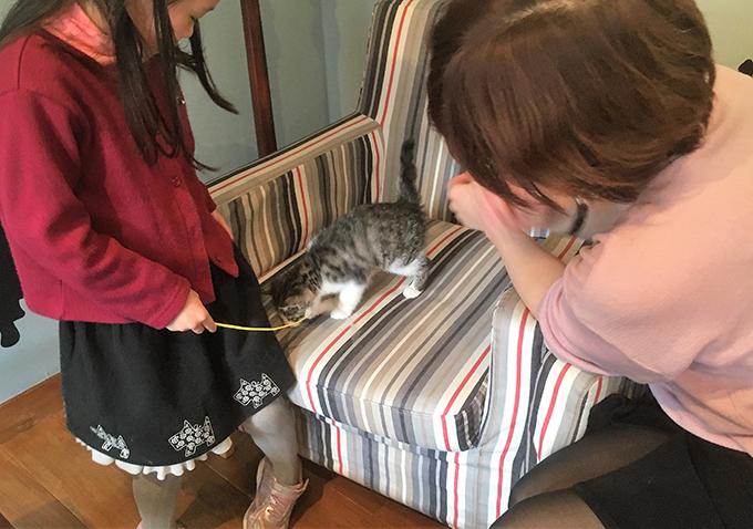 保護猫 ムロ 猫カフェ ねこ ネコ 猫 しらさぎカフェ 客