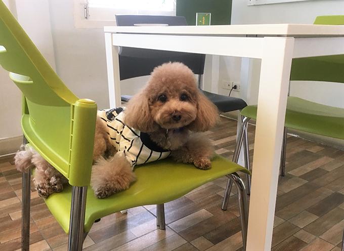 ASILO Pet Spa and Hotel 愛犬 イヌ 犬 いぬ ワンちゃん わんちゃん ペットホテル 預かり