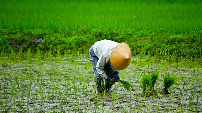 田植えは北海道より九州のほうが遅いのはなぜ?