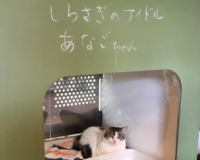 しらさぎ動物病院 しらさぎカフェ 猫カフェ あなご