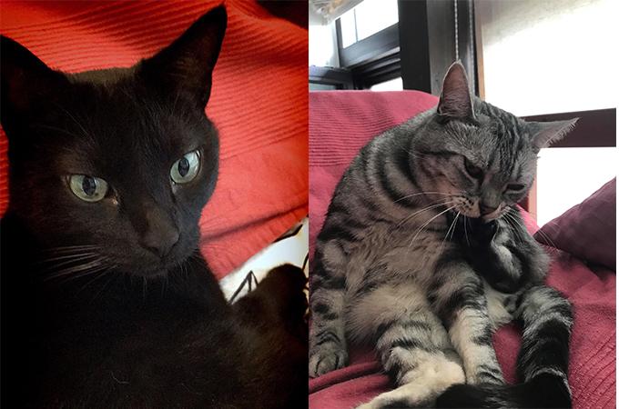 しらさぎ動物病院 しらさぎカフェ 猫カフェ アロン グーグー