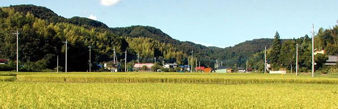 稲作 グリーンツーリズム