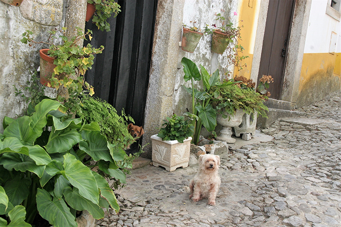 ポルトガル 犬 いぬ イヌ 多頭飼い