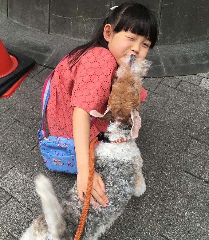 イヌ 犬 いぬ 愛犬 繁殖 リタイア犬 シニアドッグ テリア ブリーダー セカンドライフ 尻尾 フリフリ ペロペロ 初対面
