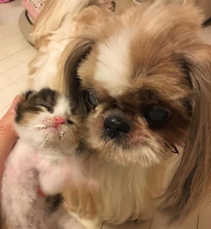 ミルクボランティア 保護猫 赤ちゃん 子猫 仔猫 ねこ ネコ 猫 愛猫 世話 犬 いぬ イヌ 愛犬