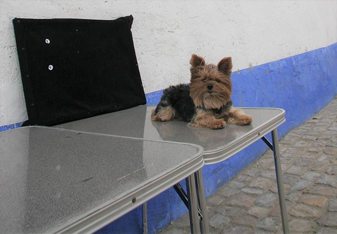 ポルトガル 犬 いぬ イヌ オビドス 協会 看板犬 露店