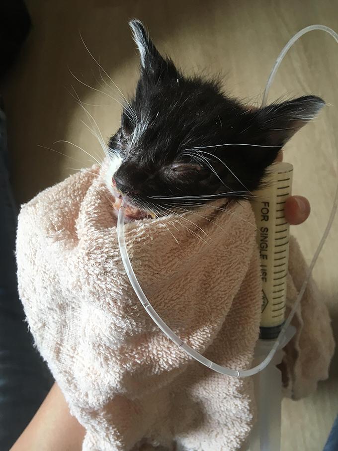 ミルクボランティア 保護猫 赤ちゃん 子猫 仔猫 ねこ ネコ 猫 愛猫 カテーテル 授乳 ミルク