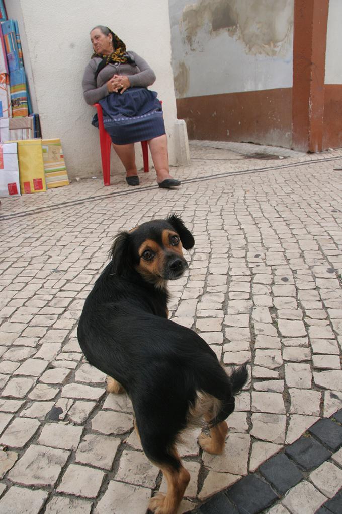ポルトガル 犬 いぬ イヌ 愛犬 店主