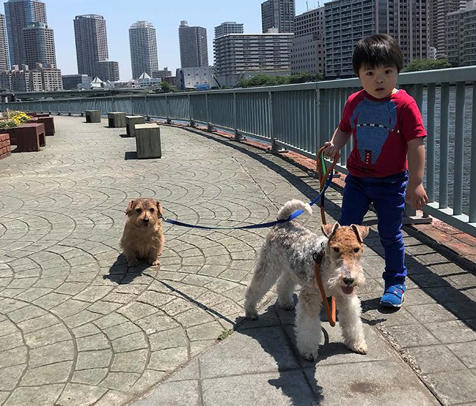 イヌ 犬 いぬ 愛犬 繁殖 リタイア犬 シニアドッグ テリア ブリーダー セカンドライフ 仲良し
