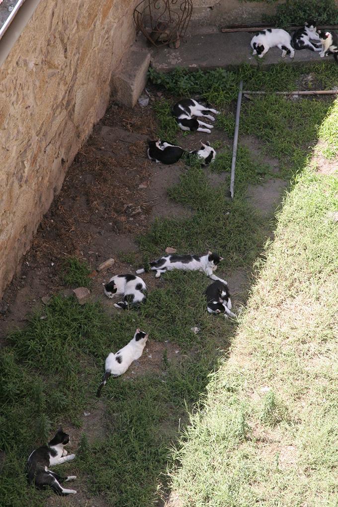 ポルトガル ネコ 猫 ねこ 白黒 多頭 たくさん オセロ 五目並べ