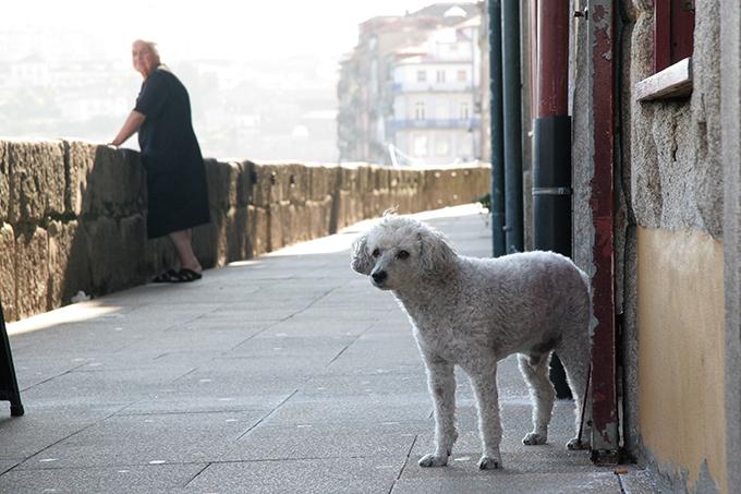 ポルトガル 犬 いぬ イヌ 愛犬 リスボン 看板犬