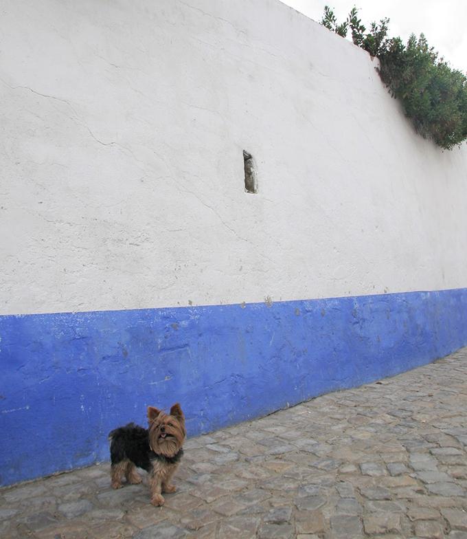 ポルトガル 犬 いぬ イヌ