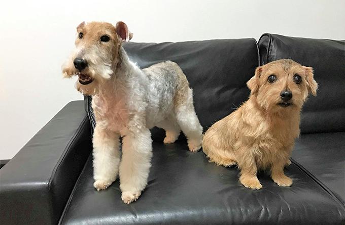 イヌ 犬 いぬ 愛犬 繁殖 リタイア犬 シニアドッグ テリア ブリーダー セカンドライフ