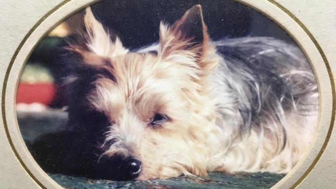 「ごめん」から「ありがとう」へ。ペットロスの治癒で知った愛犬の本心
