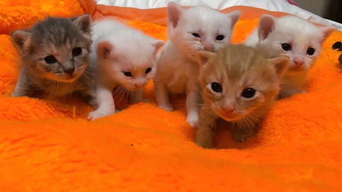 猫の飼育崩壊が家庭内で激増!? 世界初の無料の避妊去勢病院で根本解決に挑戦!