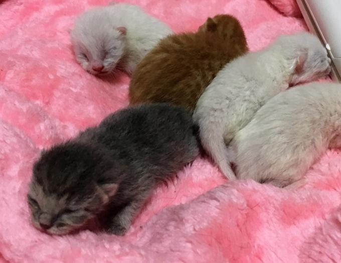 愛猫 ネコ ねこ 猫 保護 NPO法人 ねこけん こねこ 子猫 仔猫 赤ちゃん 多頭飼育
