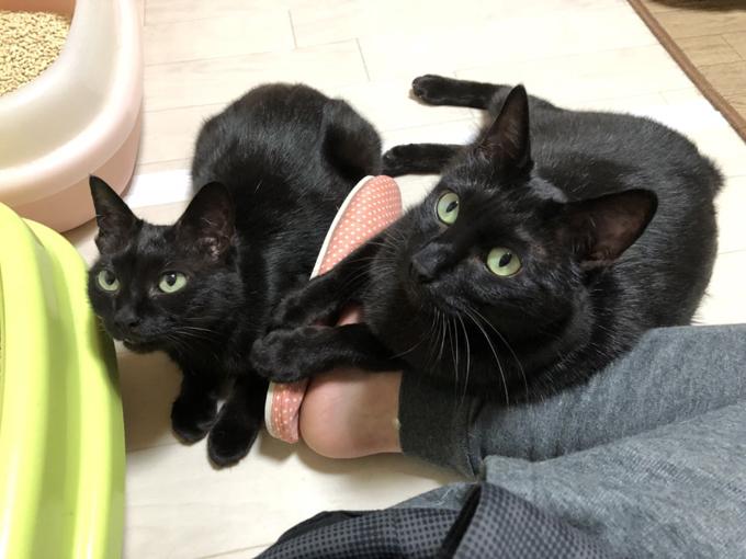 愛猫 ネコ ねこ 猫 保護 NPO法人 ねこけん 多頭飼育 ボランティア 黒猫 クロネコ