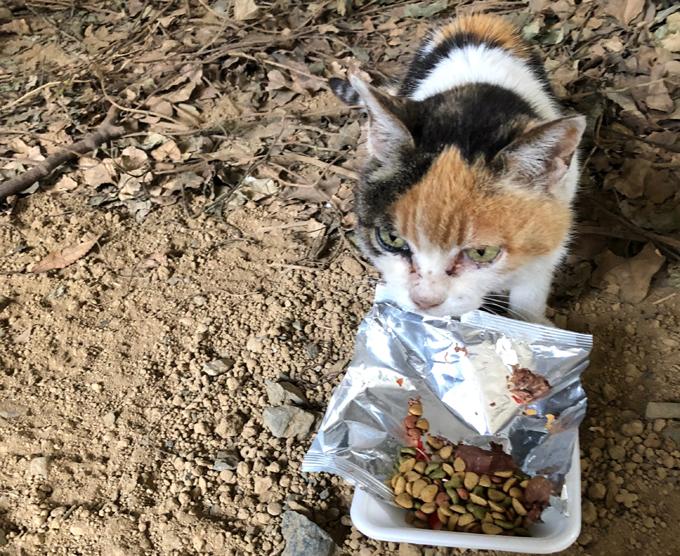 愛猫 ネコ ねこ 猫 保護 NPO法人 ねこけん 野良猫 のら猫 野良 三毛猫 ごはん カリカリ