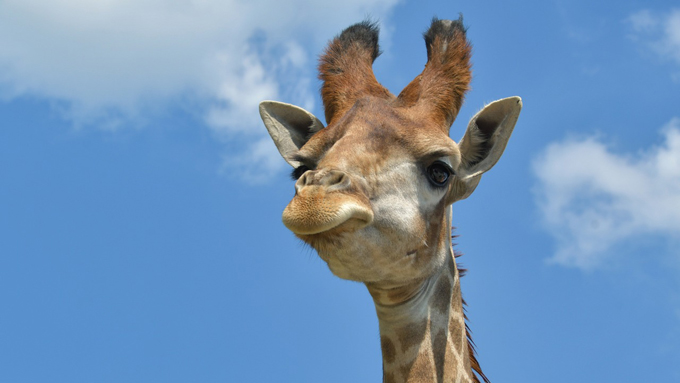 夏休みに動物園で披露したい! おもしろアニマル豆知識