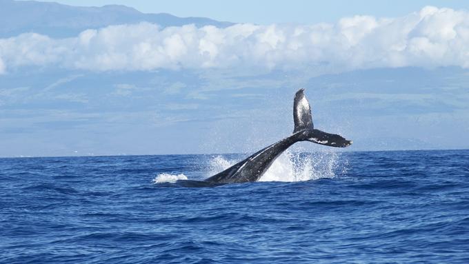 宇宙へ旅立ったクジラの歌声と光るホタルの共通点